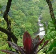 Waterfall - Hana Highway - Maui