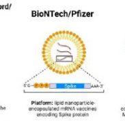 Comparing Australia's three COVID-19 vaccine options